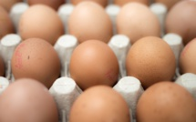 Eggs contaminated with insecticide Fipronil found in France, Britain