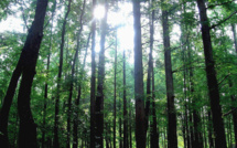 Japan ponders biomass plantation project to provide domestic energy needs
