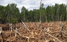 Chinese banks become the world's second-largest sponsor of deforestation