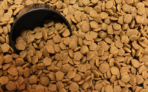 Billionaire Mark Cuban invests in clean protein pet food manufacturer