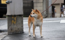 South Korea is considering ban on dog meat