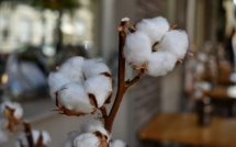 Cotton prices hit a ten-year high
