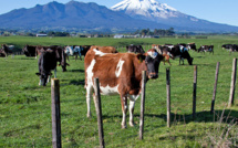Fonterra Australia to open independent trust to support farmers